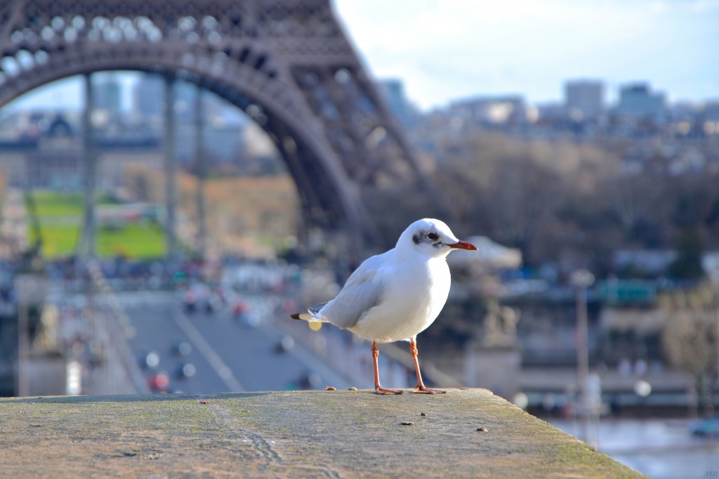 seagull-eiffel